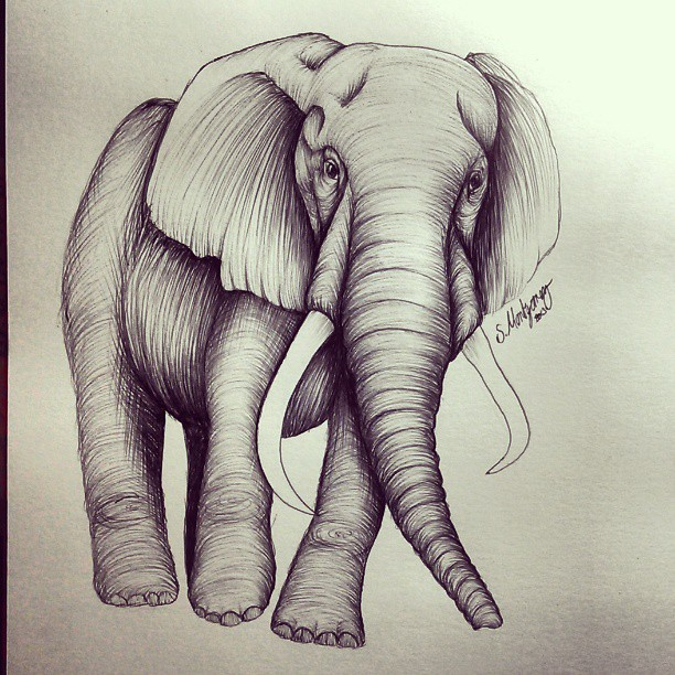 Elephant Drawing Tattoo Elephant Tattoo Design by