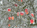 Iced apples