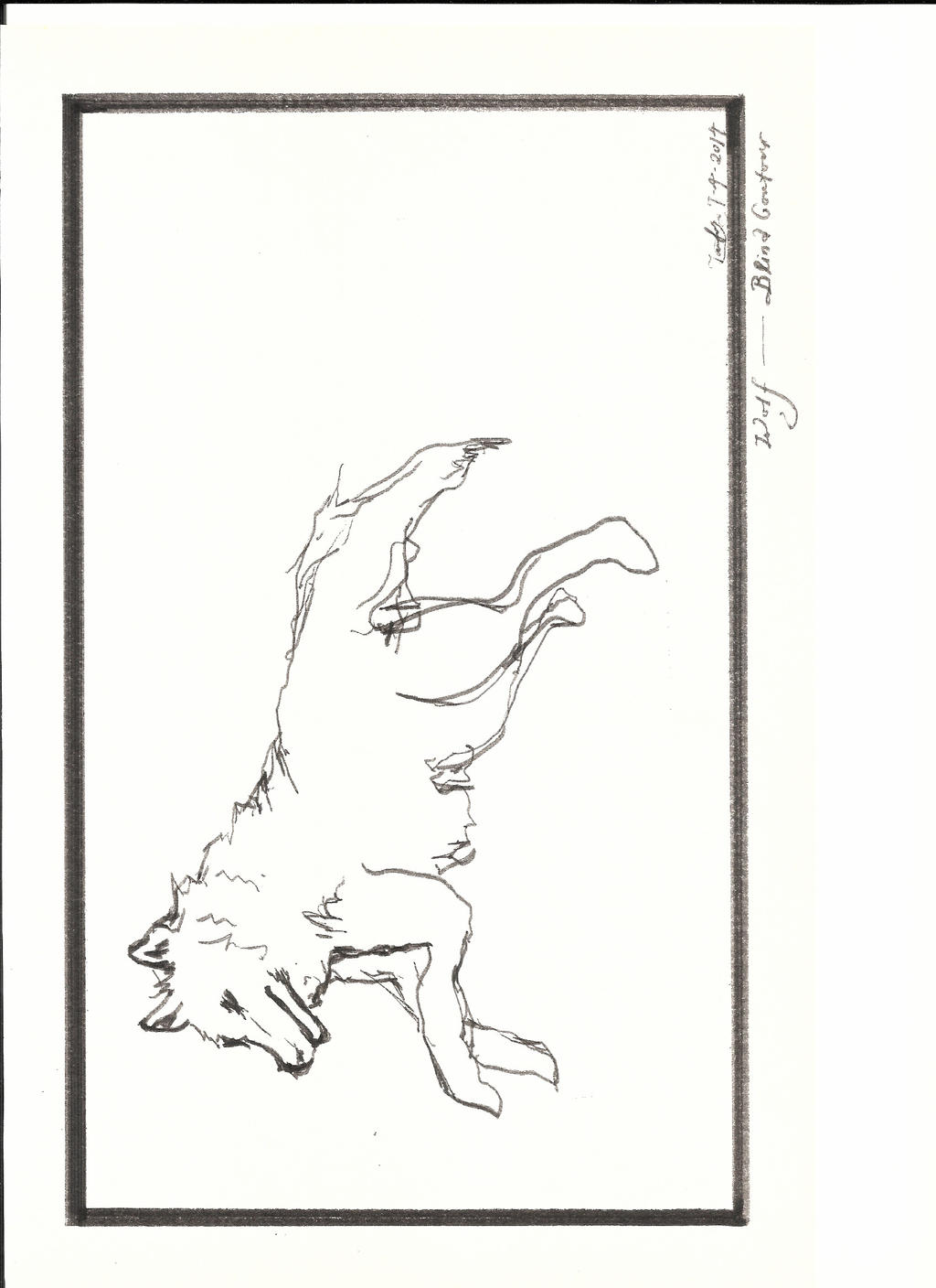 Contour Line Drawings Of Animals : Blind contour of wolf by dilystam on deviantart