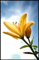 Flower vs Sky by Marthep