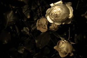 Precious gold by sparkica