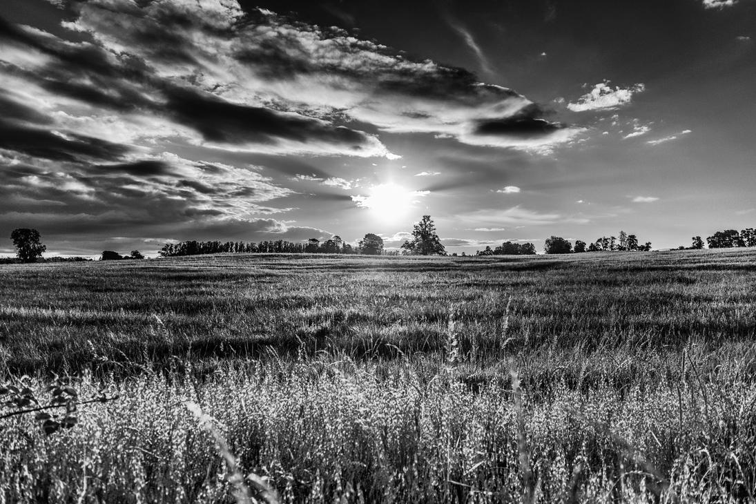 wheat field by elgriego