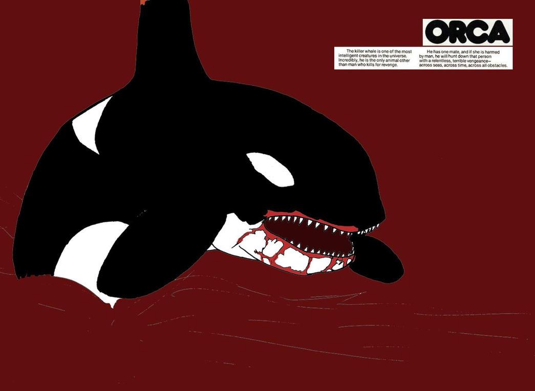 mean killer whale cartoon wwwimgkidcom the image kid