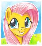 Fluttershy (coloursoft pencils II)