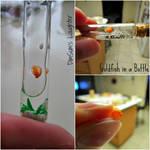 Goldfish Tube