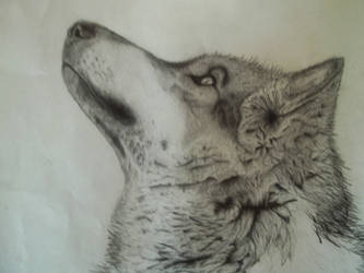 wolf 1 by stendran