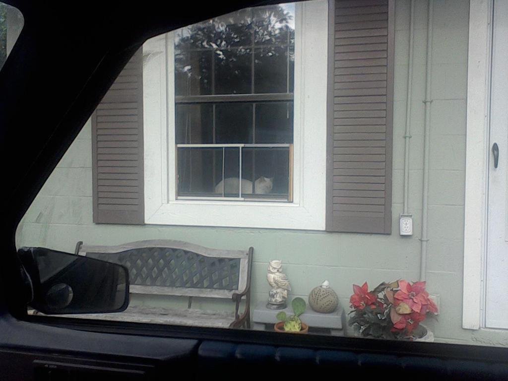Prissy in a Window by TreLore