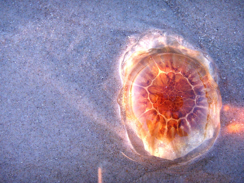 Jellyfish 4 by Arbelwen