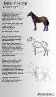 Horse Anatomy by Voodoo-Wolf