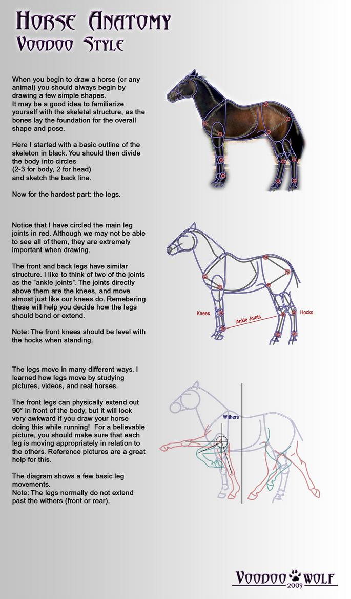 Horse Anatomy By Voodoo Wolf On Deviantart