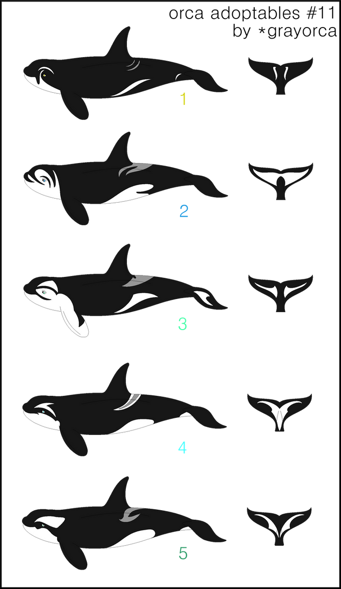 Orca Adoptables Lot #11 (closed) by grayorca