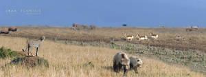 rewilding north america plains