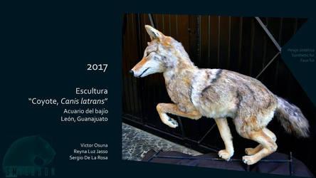 Sergio De La Rosa Coyote