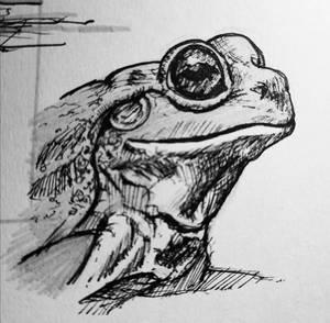 Toad practice