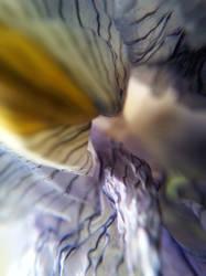 Inside Iris