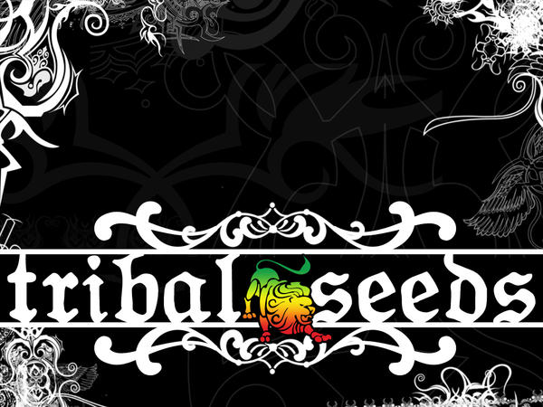 tribal seeds - DriverLayer Search Engine