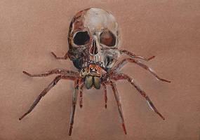 friendly neighbourhood spider