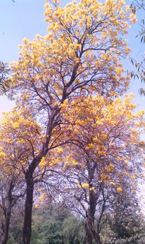 Fall by malaykeshav
