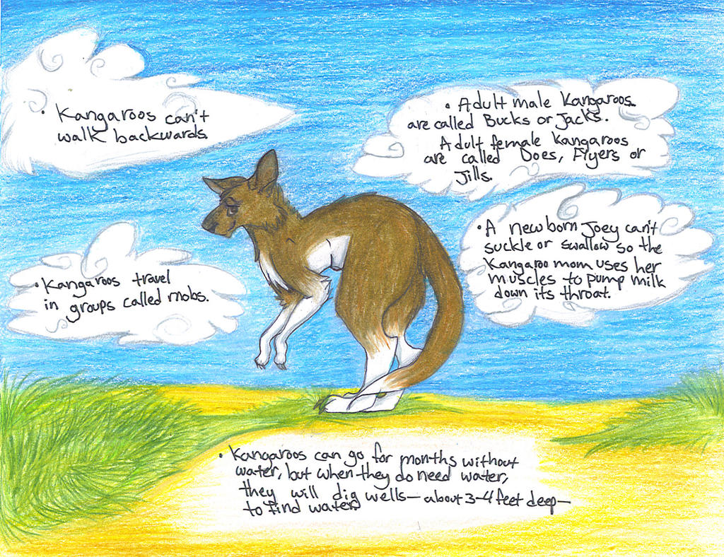 Kangaroo Facts Project by Sleepy-Scales on DeviantArt