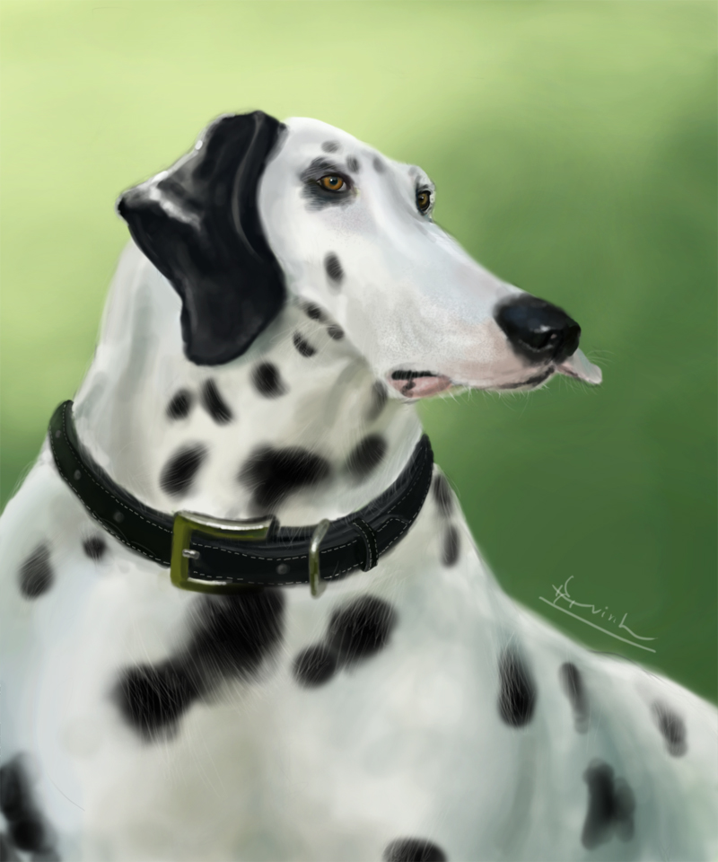 Dalmatian by 2lua