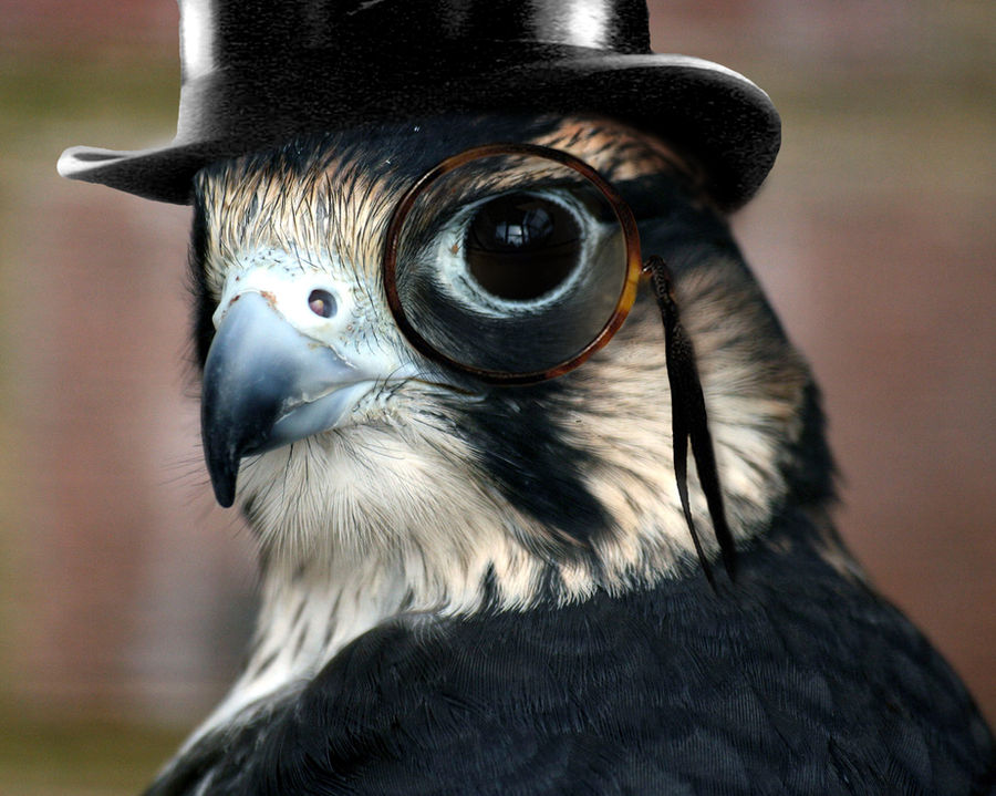 Bird in a Tophat