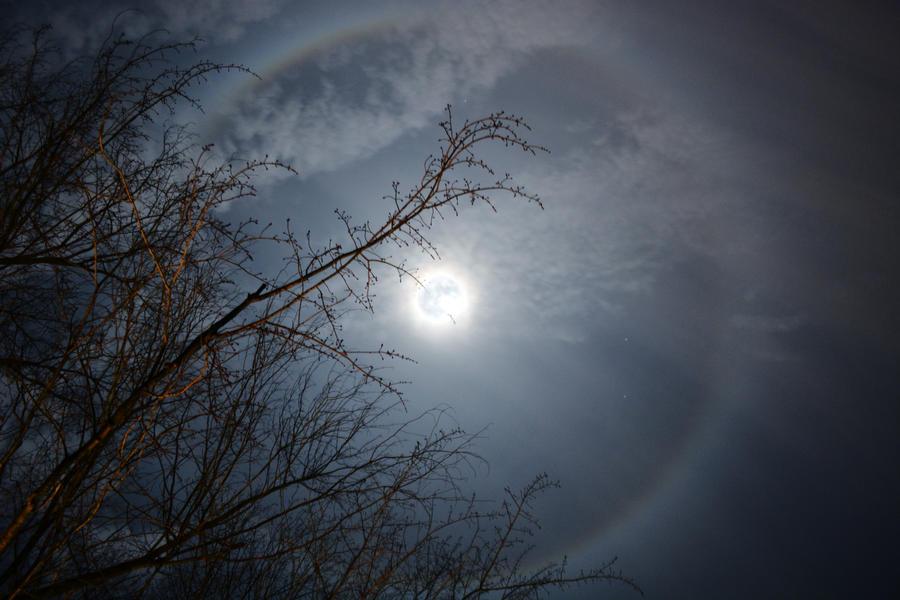 Yule Moonlight by Ciarra