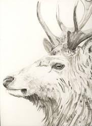 Deer by laserboyjc