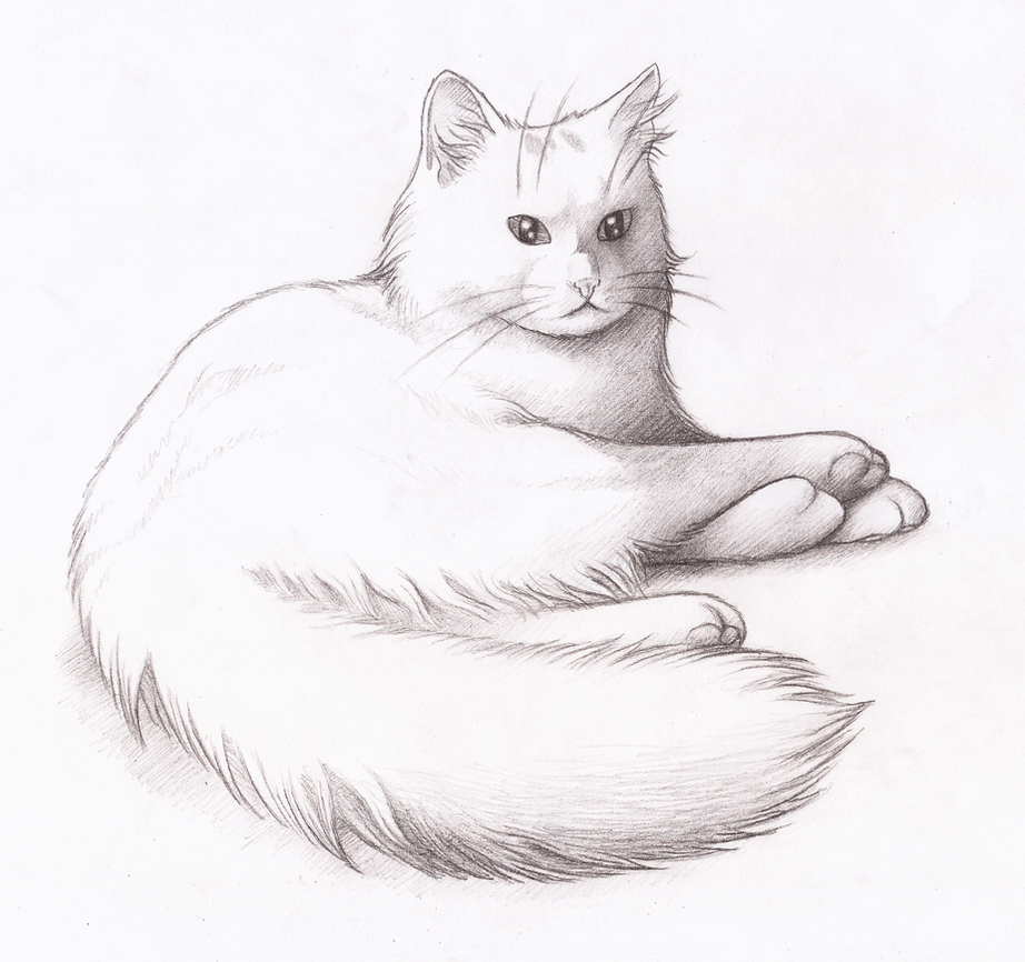 Our Cat Fluxi by CaligariMarte