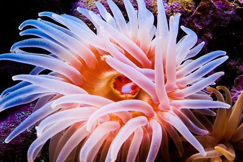 Big blob of pink tentacles by toribio