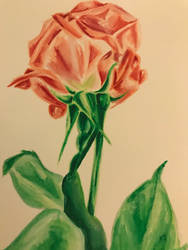 Watercolor single rose