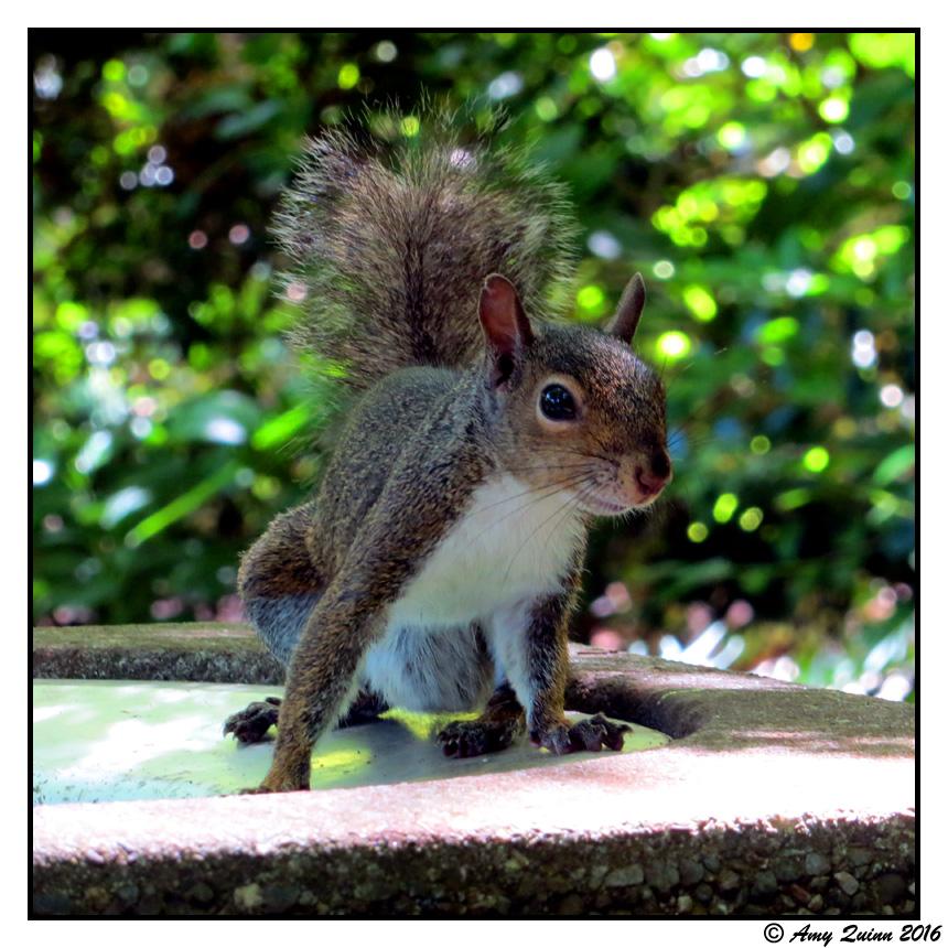 Squirrel by KemicalReaxion