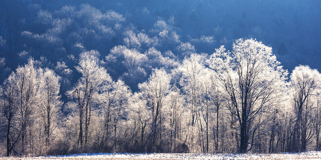 The Crystal Forest from Coddington Road by avjake