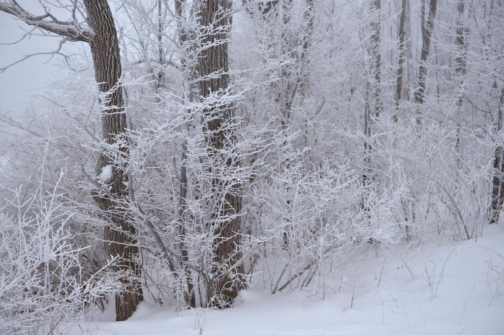 The effects of freezing drizzle, Caroline, NY. by avjake