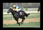 Horse Racing 2008 11
