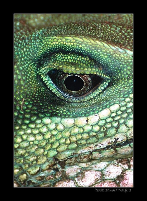 Eye by grugster
