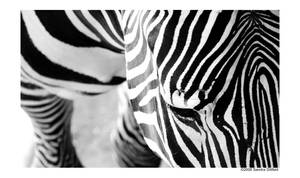 Stripes by grugster