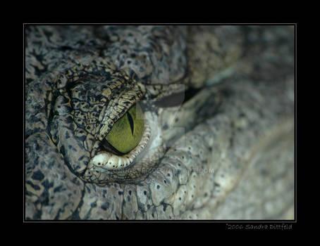 Crocodiles's eye