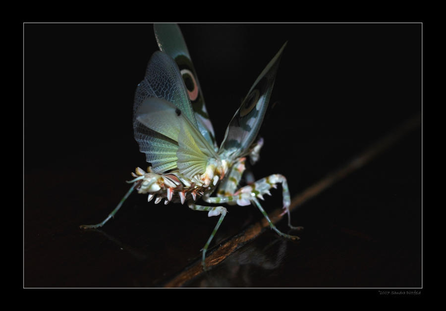 Insect Series 3