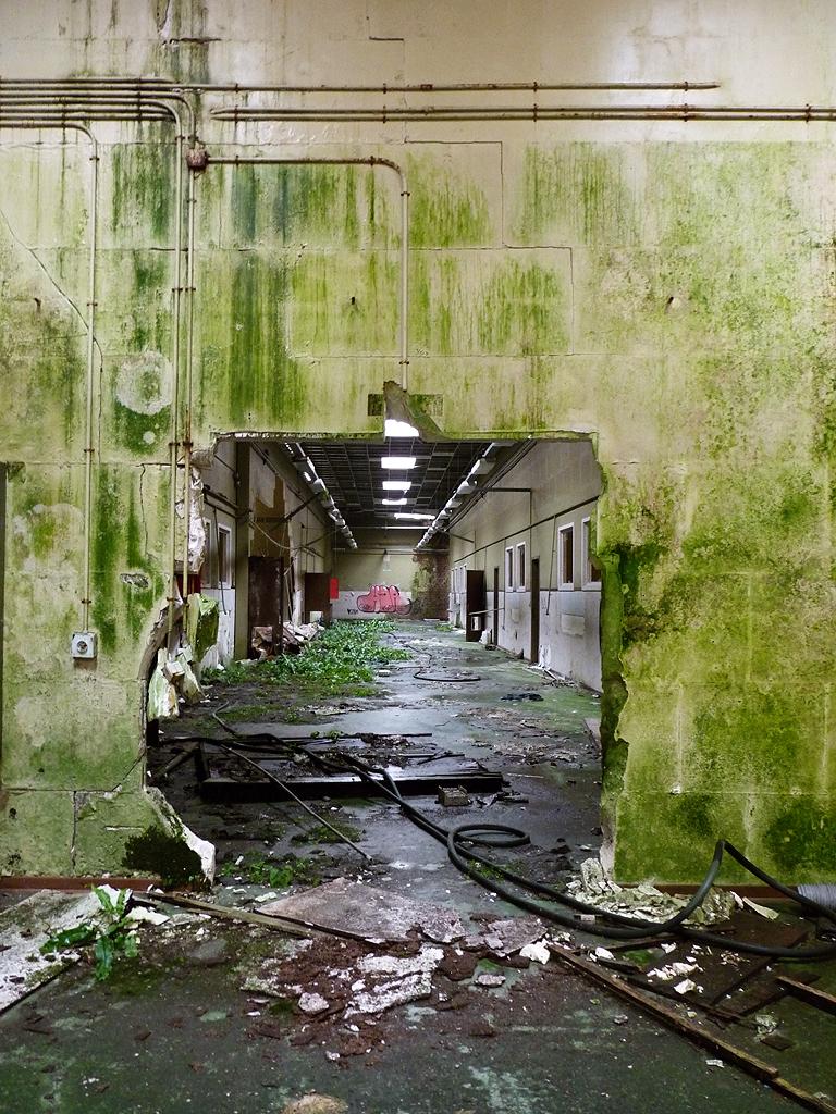 Green school by xNatje