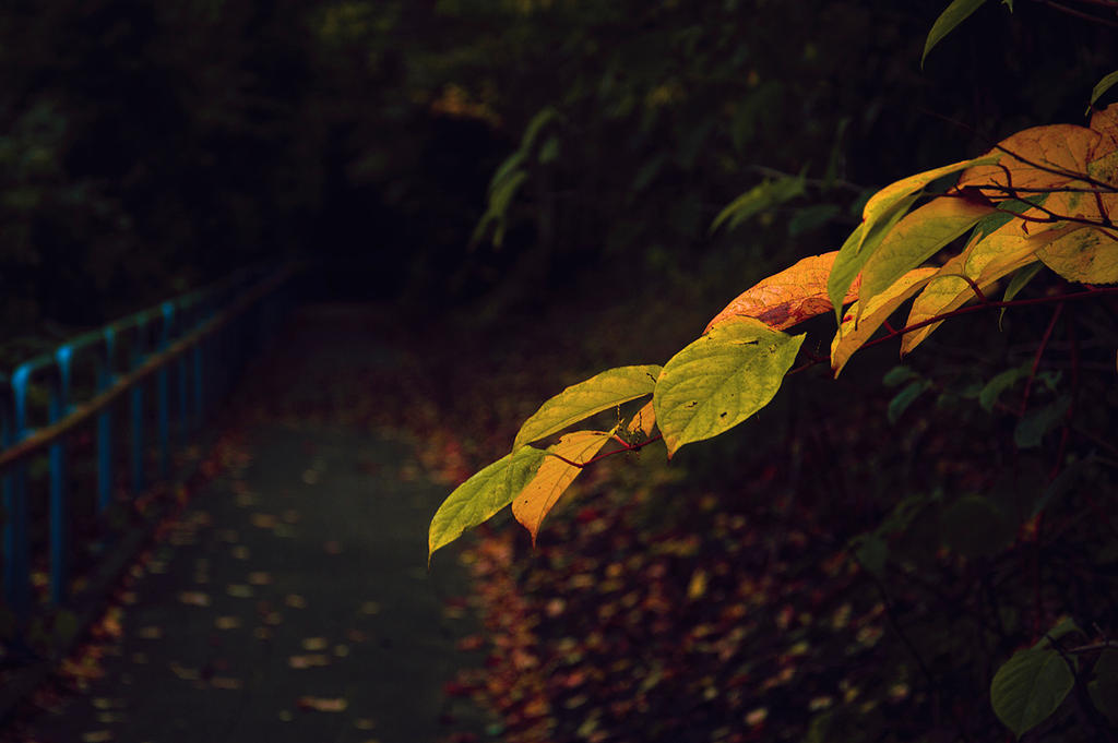 Colorfull leaves by xNatje