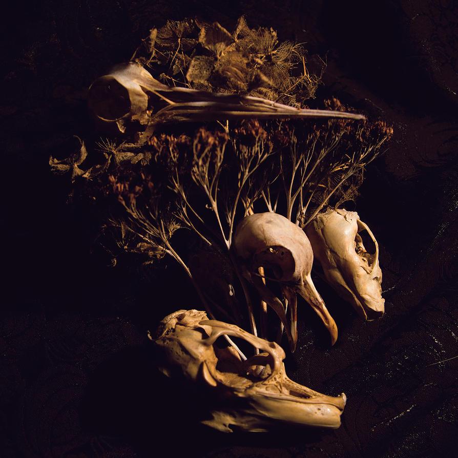 Skulls by xNatje