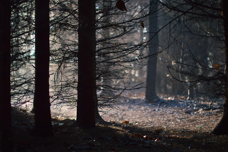Foggy woods by xNatje