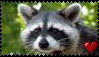 Raccoon Stamp by The-Super-Salad