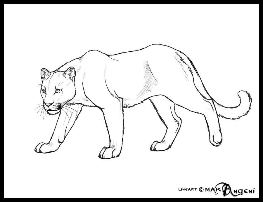Projet de dessins des pelages atypiques Free_lineart_Felid_by_makangeni