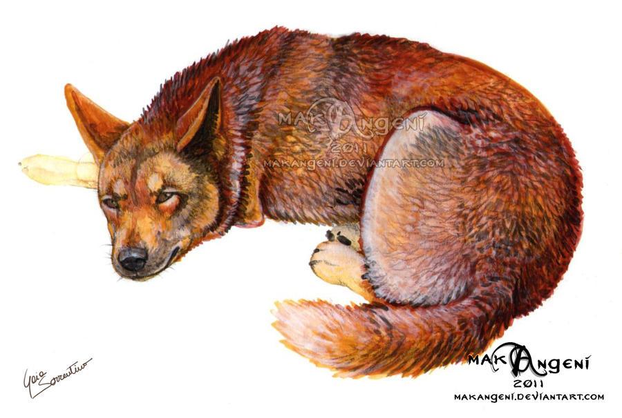 Dingo by makangeni