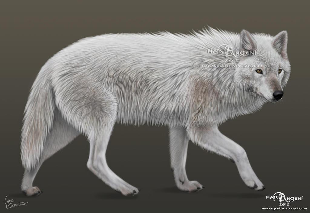 White wolf by makangeni