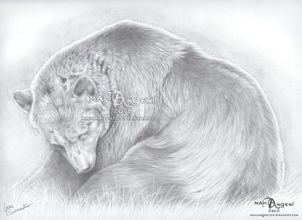 Marsican bear by makangeni