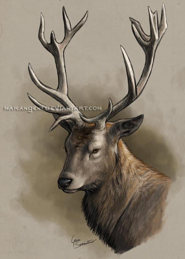 Deer Providencia Essay