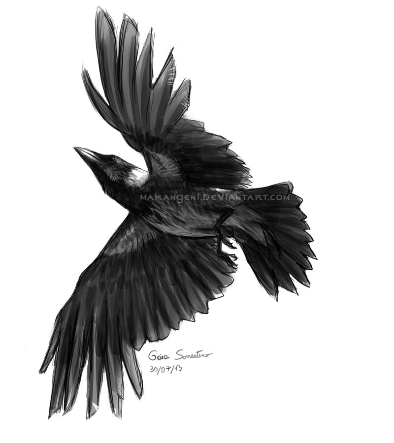 flying hooded crow sketch by makangeni on deviantart