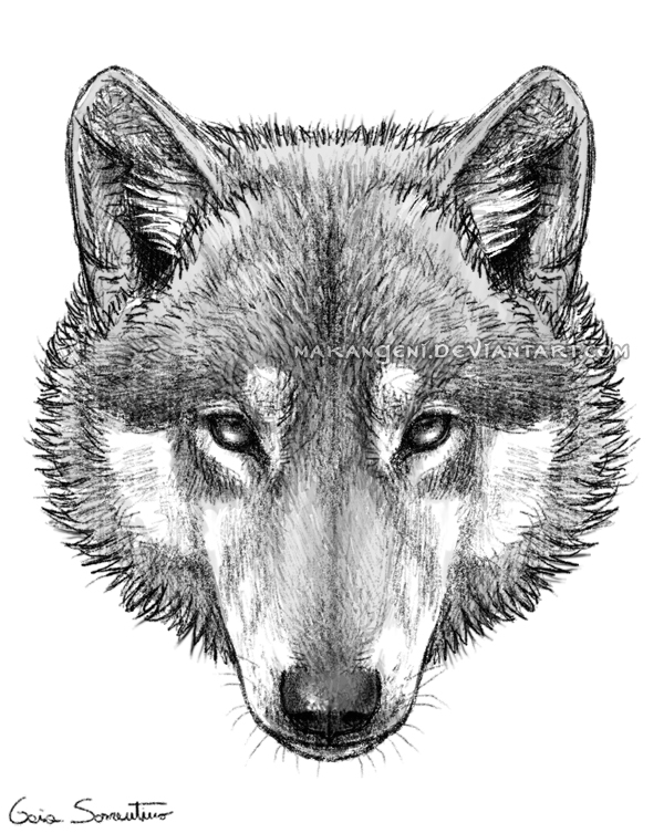 Wolf Head By Makangeni On DeviantArt